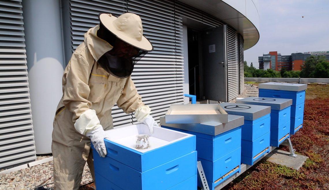 Bez pszczół nie ma ludzi